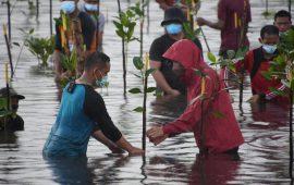 Presiden Jokowi Basah-basahan Tanam Mangrove di Pantai Setokok Batam